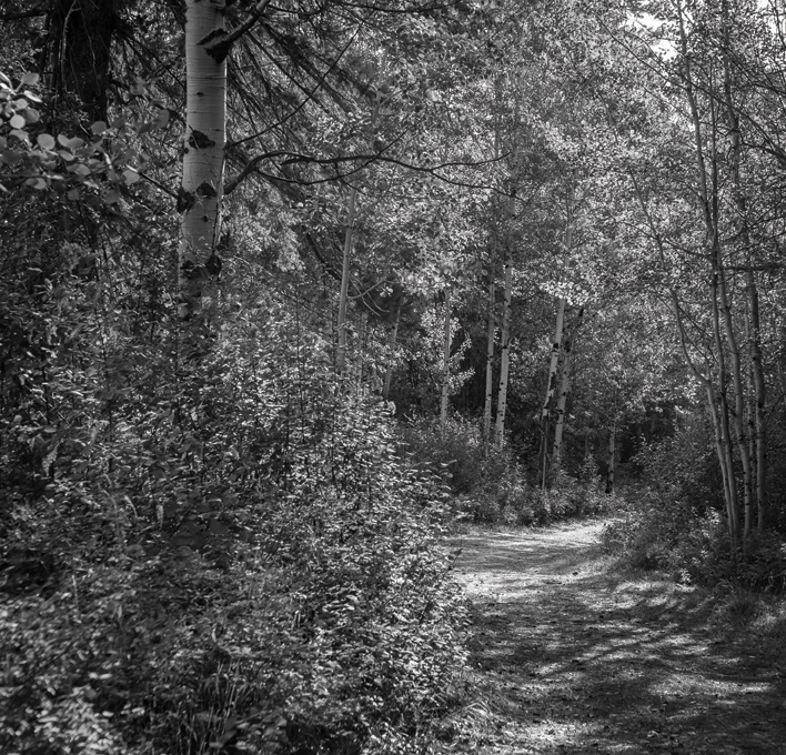 Winthropgallery.Walking-Trail-by-Teri-J_WEB