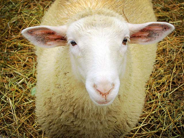 What do ewe know about wool_