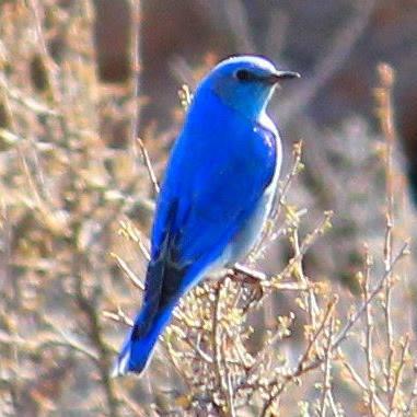 PBI Bird