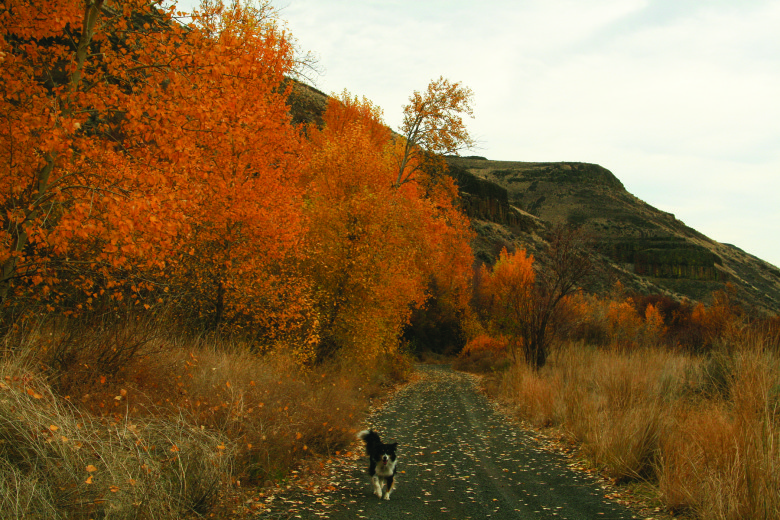 WG Douglas Canyon by Marcy Stamper